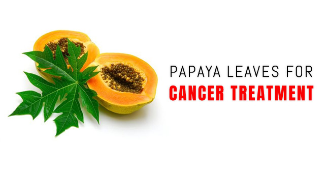 Papaya Leaves for Cancer Treatment