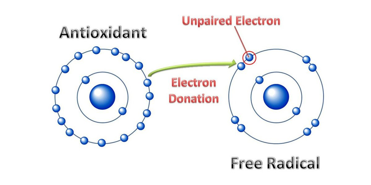 how antioxidants prevents cancer