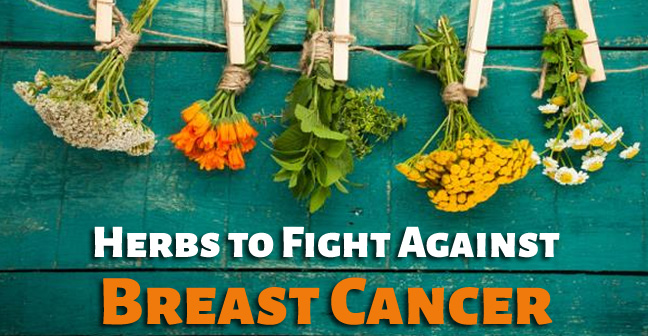 Herbs to Fight Against Breast Cancer Naturally
