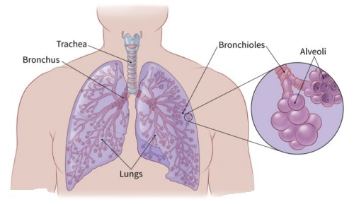 types of lung cancer small cell